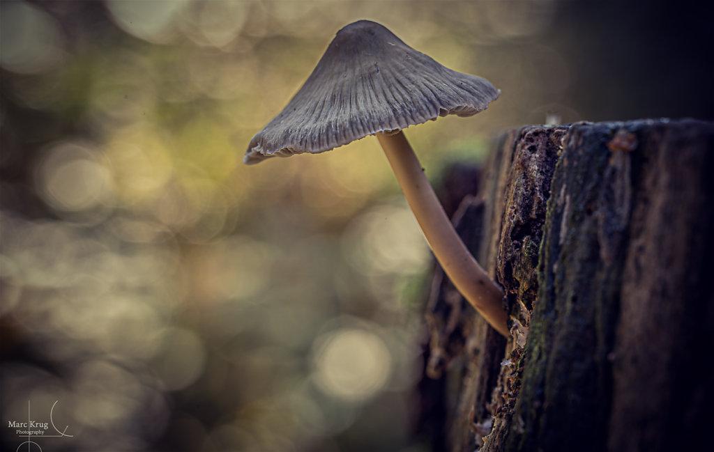 Bokeh Mushroom